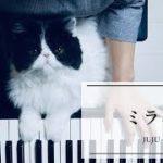 mqdefault 144 150x150 - ミライ /ドラマ「ハケン占い師アタル」主題歌/JUJU/弾いてみた/Piano【ピアノ演奏】