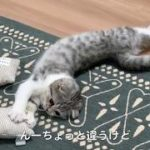 mqdefault 292 150x150 - 猫グッズ「みかづきけりけり」で遊ぶ猫[ぐう45]/Cat playing with cat toy.