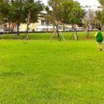 mqdefault 495 150x150 - 20151010 111843靖平煙紫 公園