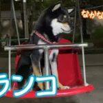 mqdefault 533 150x150 - 【豆柴】公園でブランコデビュー!遊園地みたいな遊具も!(柴犬) Shiba Inu dogs playing on a swing(子犬)