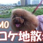 mqdefault 424 150x150 - としみつのまんぷく家ボーナスが確定した!【東海オンエア】#shorts